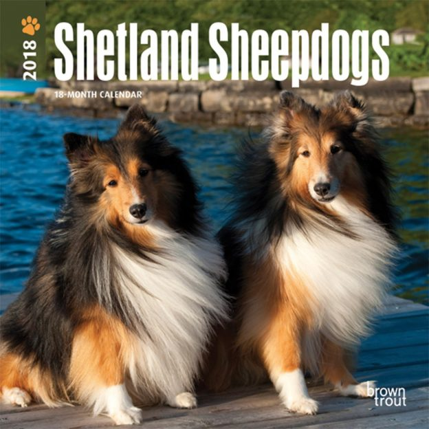 Shetland Sheepdogs 2018 7 X 7 Inch Monthly Mini Wall Calendar