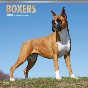Boxers 2018 12 X 12 Inch Monthly Square Wall Calendar With Foil Stamped Cover