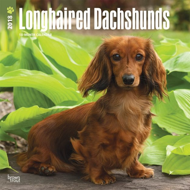 Longhaired Dachshunds 2018 12 X 12 Inch Monthly Square Wall Calendar