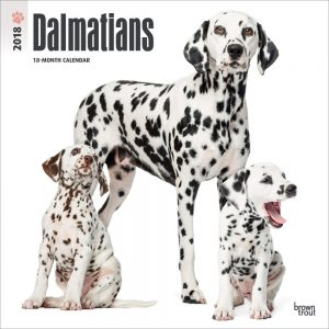 Dalmatians 2018 12 X 12 Inch Monthly Square Wall Calendar