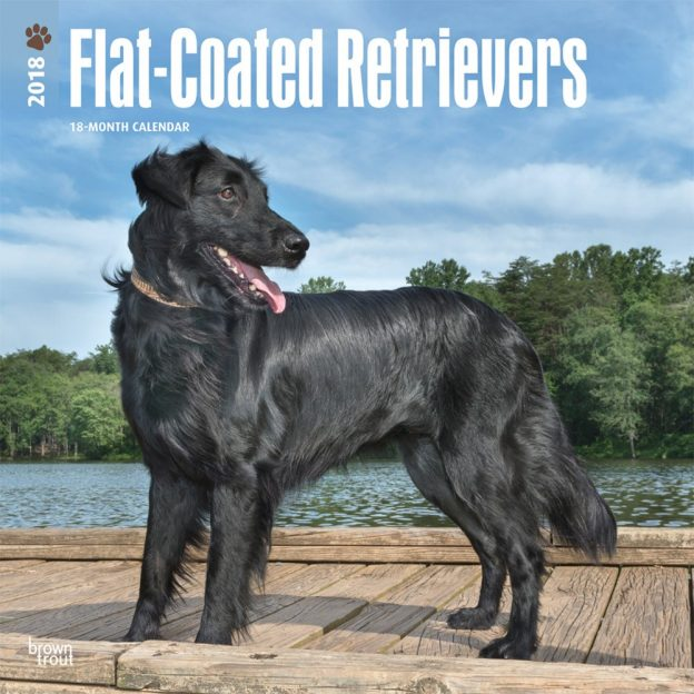 Flat Coated Retrievers 2018 12 X 12 Inch Monthly Square Wall Calendar
