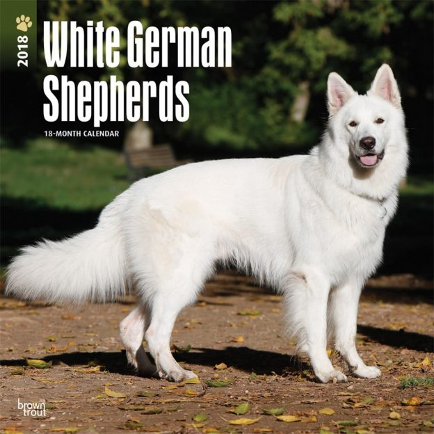 White German Shepherds 2018 12 X 12 Inch Monthly Square Wall Calendar