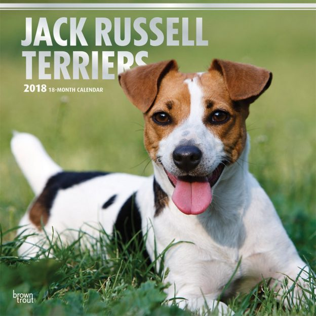 Jack Russell Terriers 2018 12 X 12 Inch Monthly Square Wall Calendar With Foil Stamped Cover