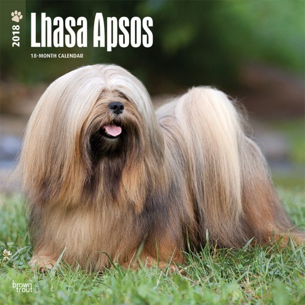 Lhasa Apsos 2018 12 X 12 Inch Monthly Square Wall Calendar