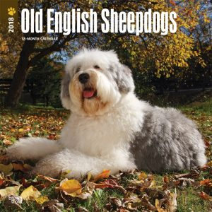 Old English Sheepdogs 2018 12 X 12 Inch Monthly Square Wall Calendar