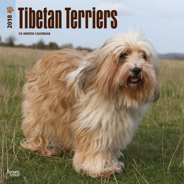 Tibetan Terriers 2018 12 X 12 Inch Monthly Square Wall Calendar