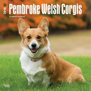 Pembroke Welsh Corgis 2018 12 X 12 Inch Monthly Square Wall Calendar