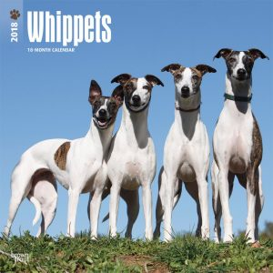 Whippets 2018 12 X 12 Inch Monthly Square Wall Calendar