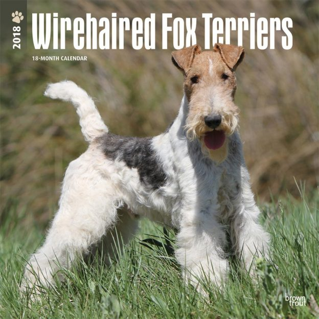 Wirehaired Fox Terriers 2018 12 X 12 Inch Monthly Square Wall Calendar