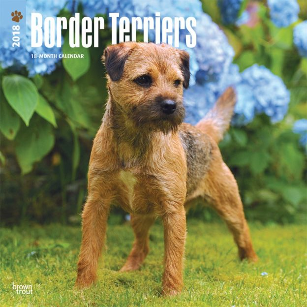 Border Terriers | DogDays 2020 Calendar and Puzzle App for