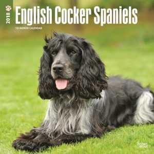 English Cocker Spaniels 2018 12 X 12 Inch Monthly Square Wall Calendar