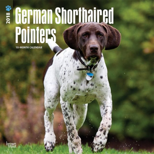 German Shorthaired Pointers International Edition 2018 12 X 12 Inch Monthly Square Wall Calendar