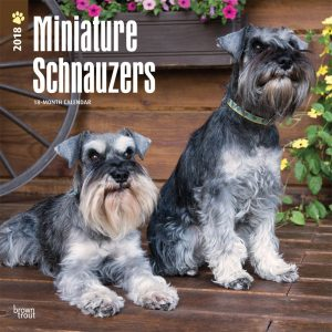 Miniature Schnauzers International Edition 2018 12 X 12 Inch Monthly Square Wall Calendar