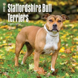 Staffordshire Bull Terriers 2018 12 X 12 Inch Monthly Square Wall Calendar