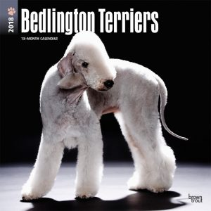 Bedlington Terriers 2018 12 X 12 Inch Monthly Square Wall Calendar