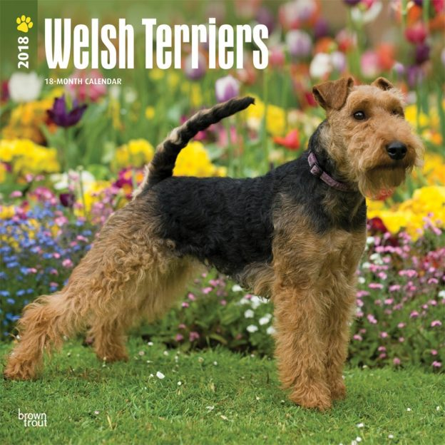 Welsh Terriers 2018 12 X 12 Inch Monthly Square Wall Calendar