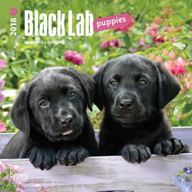 Black Labrador Retriever Puppies 2018 7 X 7 Inch Monthly Mini Wall Calendar