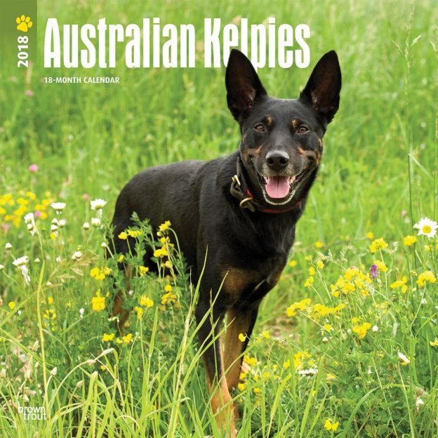 Australian Kelpies 2018 12 X 12 Inch Monthly Square Wall Calendar