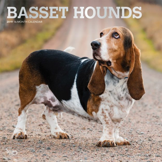 Basset Hounds 2019 12 x 12 Inch Monthly Square Wall Calendar with Foil Stamped Cover, Animals Dog Breeds Hound