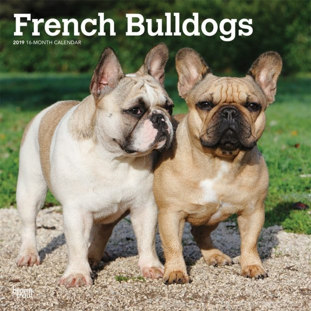 French Bulldogs 2019 12 x 12 Inch Monthly Square Wall Calendar, Animals Dog Breeds French