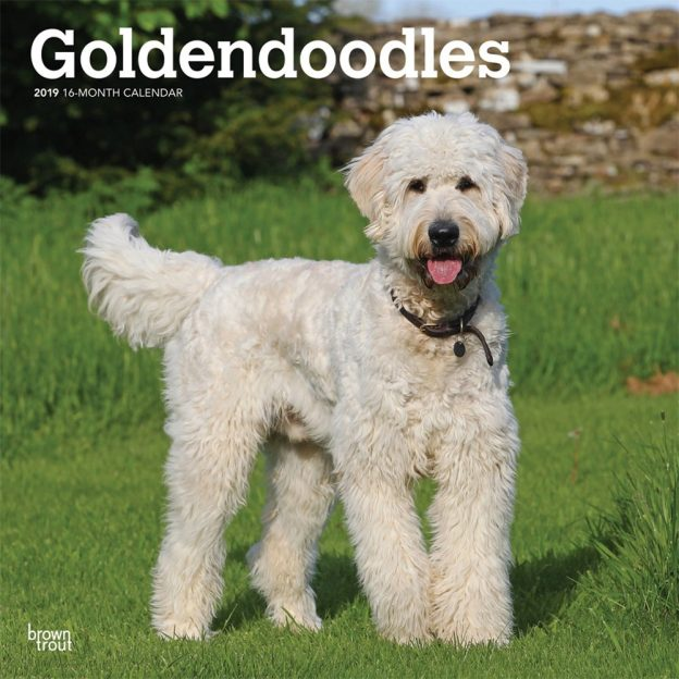 Goldendoodles 2019 12 x 12 Inch Monthly Square Wall Calendar, Animals Mixed Dog Breeds
