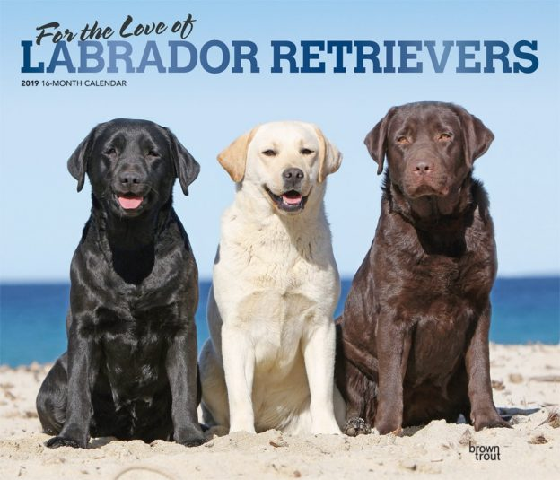 For the Love of Labrador Retrievers 2019 14 x 12 Inch Monthly Deluxe Wall Calendar with Foil Stamped Cover, Animal Dog Breeds