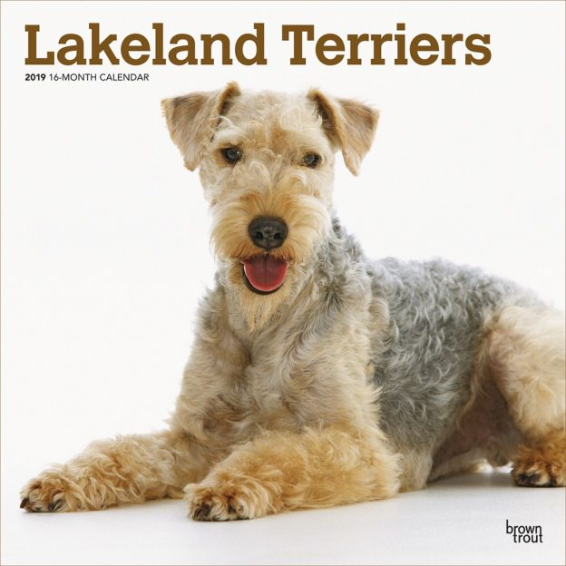 Lakeland Terriers 2019 12 x 12 Inch Monthly Square Wall Calendar, Animals Dog Breeds Terriers