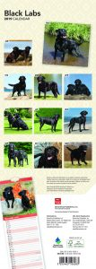 Black Labs 2019 6.75 x 16.5 Inch Monthly Slimline Wall Calendar, Dog Canine Labrador