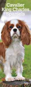 Cavalier King Charles Spaniels 2019 6.75 x 16.5 Inch Monthly Slimline Wall Calendar, Dog Canine
