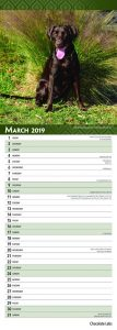 Chocolate Labradors 2019 6.75 x 16.5 Inch Monthly Slimline Wall Calendar, Dog Canine Lab