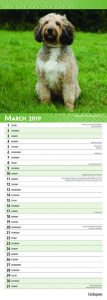 Cockapoos 2019 6.75 x 16.5 Inch Monthly Slimline Wall Calendar, Dog Canine