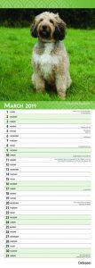 Cockapoos 2019 6.75 x 16.5 Inch Monthly Slimline Wall Calendar, Dog Canine