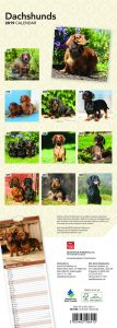 Dachshunds 2019 6.75 x 16.5 Inch Monthly Slimline Wall Calendar, Dog Canine