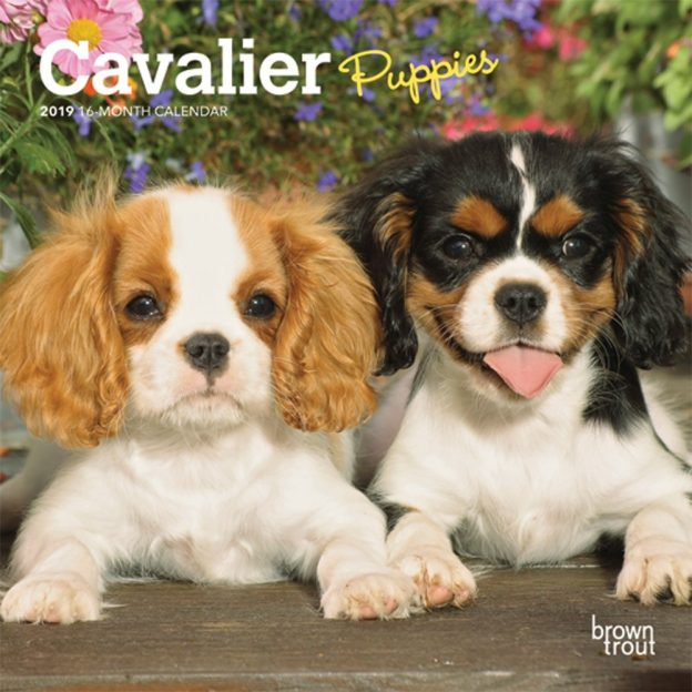 Cavalier King Charles Spaniel Puppies 2019 7 x 7 Inch Monthly Mini Wall Calendar, Animals Dog Breeds Puppies
