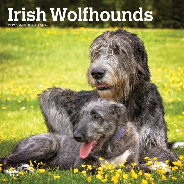 Irish Wolfhounds 2019 12 x 12 Inch Monthly Square Wall Calendar, Animals Irish Dog Breeds