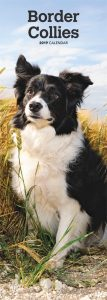 Border Collies 2019 6.75 x 16.5 Inch Monthly Slimline Wall Calendar