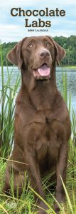 Chocolate Labradors 2019 6.75 x 16.5 Inch Monthly Slimline Wall Calendar