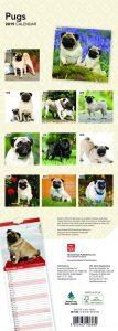 Pugs 2019 6.75 x 16.5 Inch Monthly Slimline Wall Calendar, Toy Dog Canine