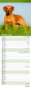 Yellow Labradors 2019 6.75 x 16.5 Inch Monthly Slimline Wall Calendar, Dog Canine Lab Hunting