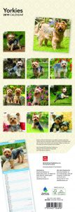 Yorkies 2019 6.75 x 16.5 Inch Monthly Slimline Wall Calendar, Dog Canine Yorkshire Terriers