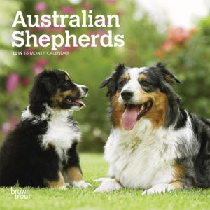Australian Shepherds 2019 7 x 7 Inch Monthly Mini Wall Calendar