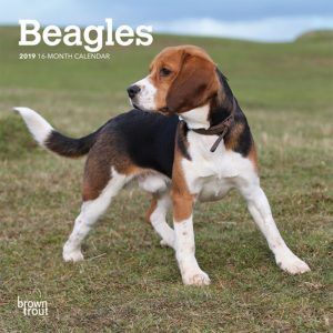 Beagles 2019 7 x 7 Inch Monthly Mini Wall Calendar