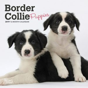 Border Collie Puppies 2019 7 x 7 Inch Monthly Mini Wall Calendar