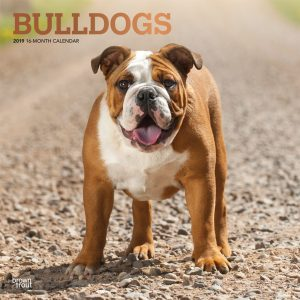 Bulldogs 2019 12 x 12 Inch Monthly Square Wall Calendar with Foil Stamped Cover