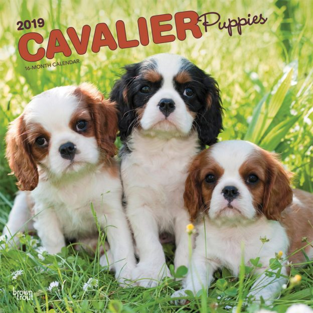 Cavalier King Charles Spaniel Puppies 2019 12 x 12 Inch Monthly Square Wall Calendar