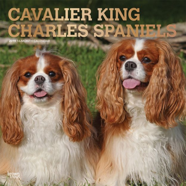 Cavalier King Charles Spaniels 2019 12 x 12 Inch Monthly Square Wall Calendar with Foil Stamped Cover