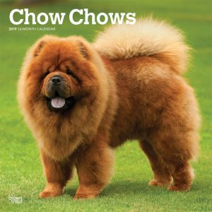 Chow Chows 2019 12 x 12 Inch Monthly Square Wall Calendar