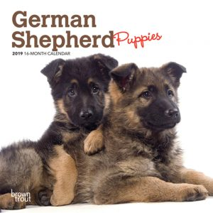 German Shepherd Puppies 2019 7 x 7 Inch Monthly Mini Wall Calendar