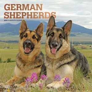 German Shepherds 2019 12 x 12 Inch Monthly Square Wall Calendar with Foil Stamped Cover