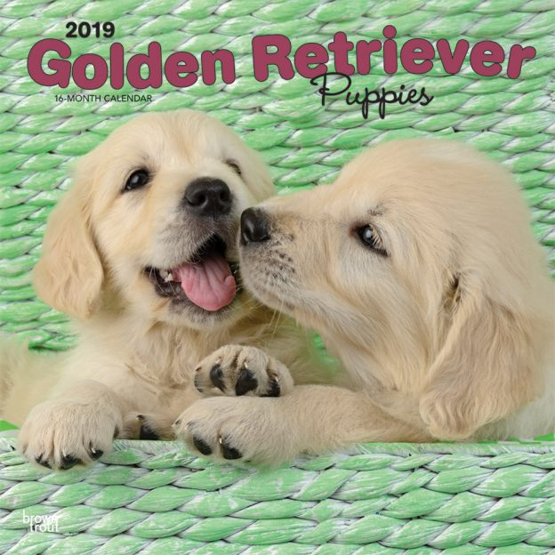 Golden Retriever Puppies 2019 12 x 12 Inch Monthly Square Wall Calendar